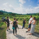 Prosecco vineyards from Venice