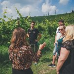 Prosecco vineyards tour from Venice